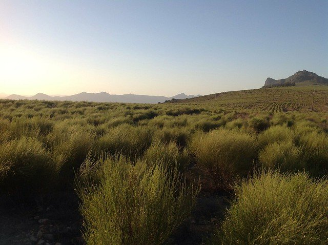 A picture of Rooibos Farm